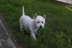 Man beste vriend, huisdier, grappige hond, slim dier, Stock Afbeeldingen