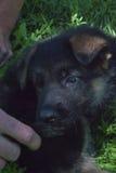 Man beste vriend, huisdier, grappige hond, slim dier, Stock Afbeelding