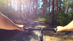 A man on bicycle rides in a pine forest in the summer afternoon in sunny weather stock video footage