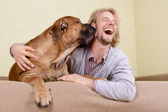 Man with big dog. Young man at home playing with a big bullmastiff dog. positively laugh Stock Images