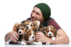 The man and big group of a beagle puppies Stock Images