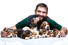The man and big group of a beagle puppies Stock Photos