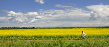 Man on bike and yellow meadow flowers field Stock Photography