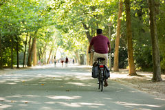 Man biking in the Vondelpark in Amsterdam. Man with Bordeaux colour T-Shirt biking in a sunny Vondelpark in Amsterdam, Netherland stock image