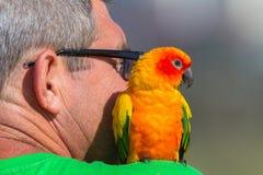 Man Bird Budgie royalty free stock image