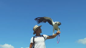Man With Bird Of Eagle. Young man holding a eagle on arm. King of the skies, symbol of power, freedom and strength stock video footage
