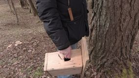Man with birdhouse checking tree stock video