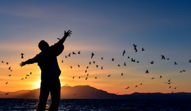 Man and birds. A man looking at a flock of birds over the sea at sunrise Stock Photos