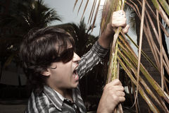 Man biting a palm tree frond. Young man about to take a bite out of a branch Royalty Free Stock Photography