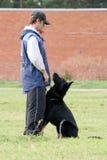 Man and Black German shepherd Royalty Free Stock Photography