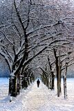 Man in Black Jacket Walking on Snowy Tree during Daytime Royalty Free Stock Photo