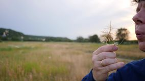 Man Blowing on a Dandelion. In the field stock footage
