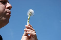 A man blowing dandelion seeds Stock Images