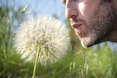 Man blowing a dandelion. Young man blowing a dandelion in a meadow Stock Images