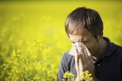 Man blowing his nose in canola field Stock Photography