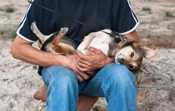 man in blue clothes sittting and holding brown dog stock photography
