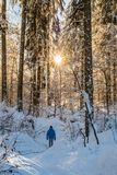 Man in blue jacket walking true snow covert forest Stock Photos