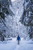 Man in blue jacket walking true snow covert forest. On lake Fusine in Italy Royalty Free Stock Images