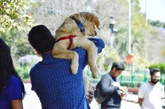 Man In Blue Long-sleeved Shirt Carrying Dog stock photo