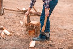 A man puts firewood on a stump for cutting in an autumn forest stock photo