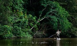 The man in a boat. SANGHA RIVER, CENTRAL AFRICA, JUNGLE BETWEEN CAMEROON AND CENTRAL AFRICAN REPUBLIC, 01 NOVEMBER 2008: The local resident floats in the Royalty Free Stock Photo