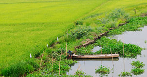 A man with boat on the canal in Angiang, Vietnam Royalty Free Stock Photography