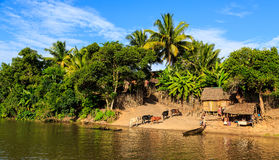 Man in a boat driving his cattle through the river to a village Royalty Free Stock Photo