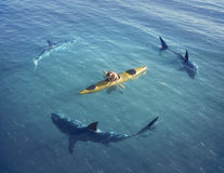 A man in a boat, kayak. was trapped in the middle of the ocean surrounded by sharks. Royalty Free Stock Photography
