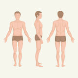 Man body anatomy, front, back and side Royalty Free Stock Photo
