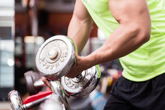 Man bodybuilder lifting weights during workout Royalty Free Stock Photography