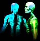 Man Bone 27 Stock Photography