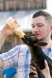 Man Bottle Feeds Goat. Man bottle feeds a baby Nigerian Dwarf Dairy Goat kid on a farm stock photo