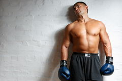 The man the boxer at a wall. The boxer in gloves with a naked torso costs at a white wall Stock Photography
