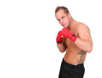 Man in Boxing Stance Royalty Free Stock Photography