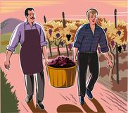 A man and a boy carrying a basket full of freshly harvested ripe. Grapes Royalty Free Stock Image