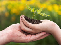 Man and boy holding green plant in hands. Royalty Free Stock Photos