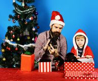 Man and boy in Santa hats play with puppies. Dad with beard and kid hold dogs near Christmas tree. Father and son with serious faces unpack presents on blue stock images