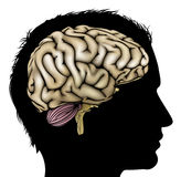 Man brain concept. A mans head in silhouette with brain. Concept for mental, psychological, brain development, learning and education or other medical theme Royalty Free Stock Photos