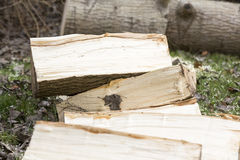 Man break wood with hammer Royalty Free Stock Photos
