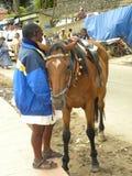Kodaikanal, Tamil Nadu, India - June 11, 2010 A man with a brown horse for pony ride near Kodaikanal Lake. A man with a brown horse for pony ride near Kodaikanal Stock Photography