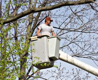 Man in a Bucket. Tree Worker evaluating the job from a bucket truck Stock Image