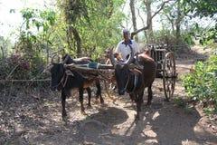 Man in Bullock Cart Royalty Free Stock Images