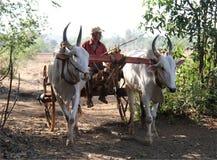 Man in Bullock Cart Royalty Free Stock Photos