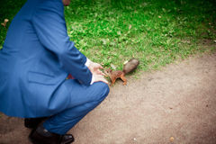 Man in a business suit feeds a squirrel Stock Photography