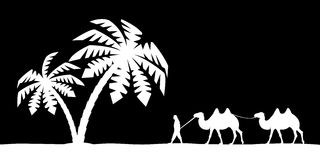 Man on the camel in palm trees. Royalty Free Stock Photography