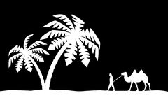 Man on the camel in palm trees. Stock Photo