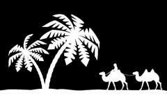 Man on the camel in palm trees. Stock Photography