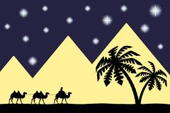 Man on the camel the pyramids. Stock Photography