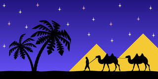 Man on the camel the pyramids. Royalty Free Stock Images