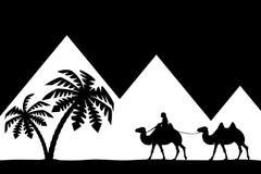 Man on the camel the pyramids. Royalty Free Stock Photos